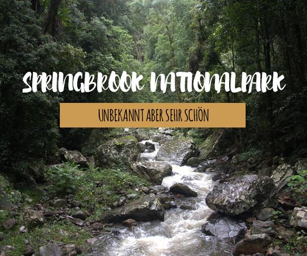 Springbrook Nationalpark – Unsere Highlights, Tipps und Infos für deine Reise