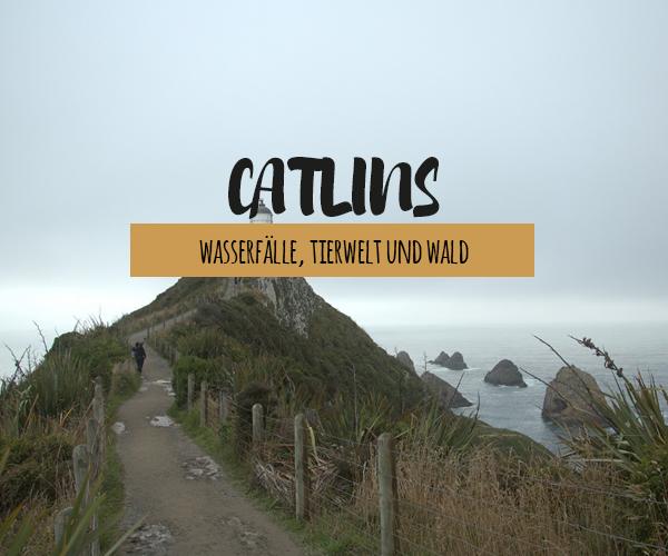 Catlins: mit verwunschenen Wasserfällen, fantastischer Tierwelt und einem versteinerten Wald